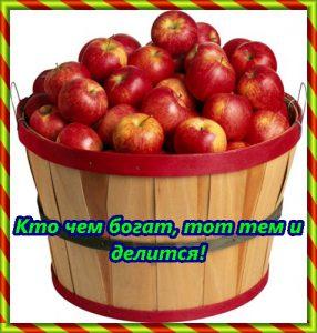 ведро яблок
