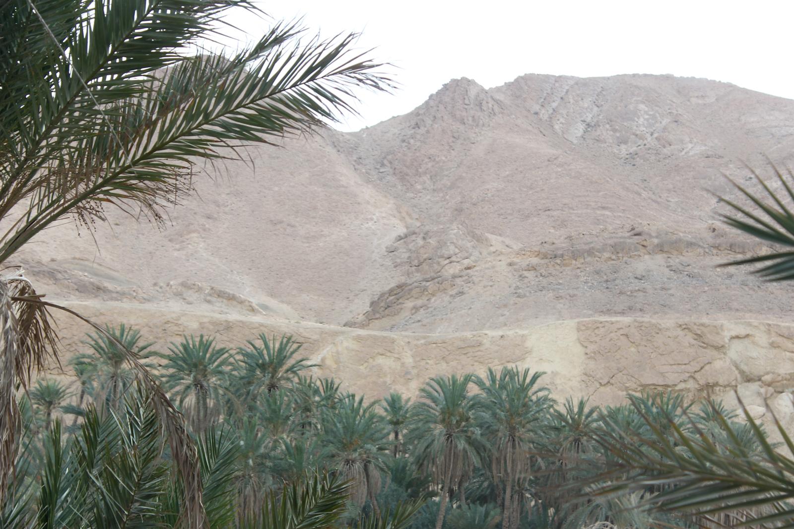 горы и пальмы