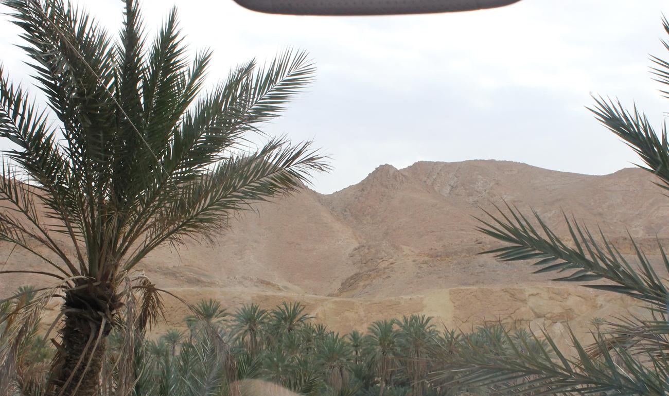 пальма и горы