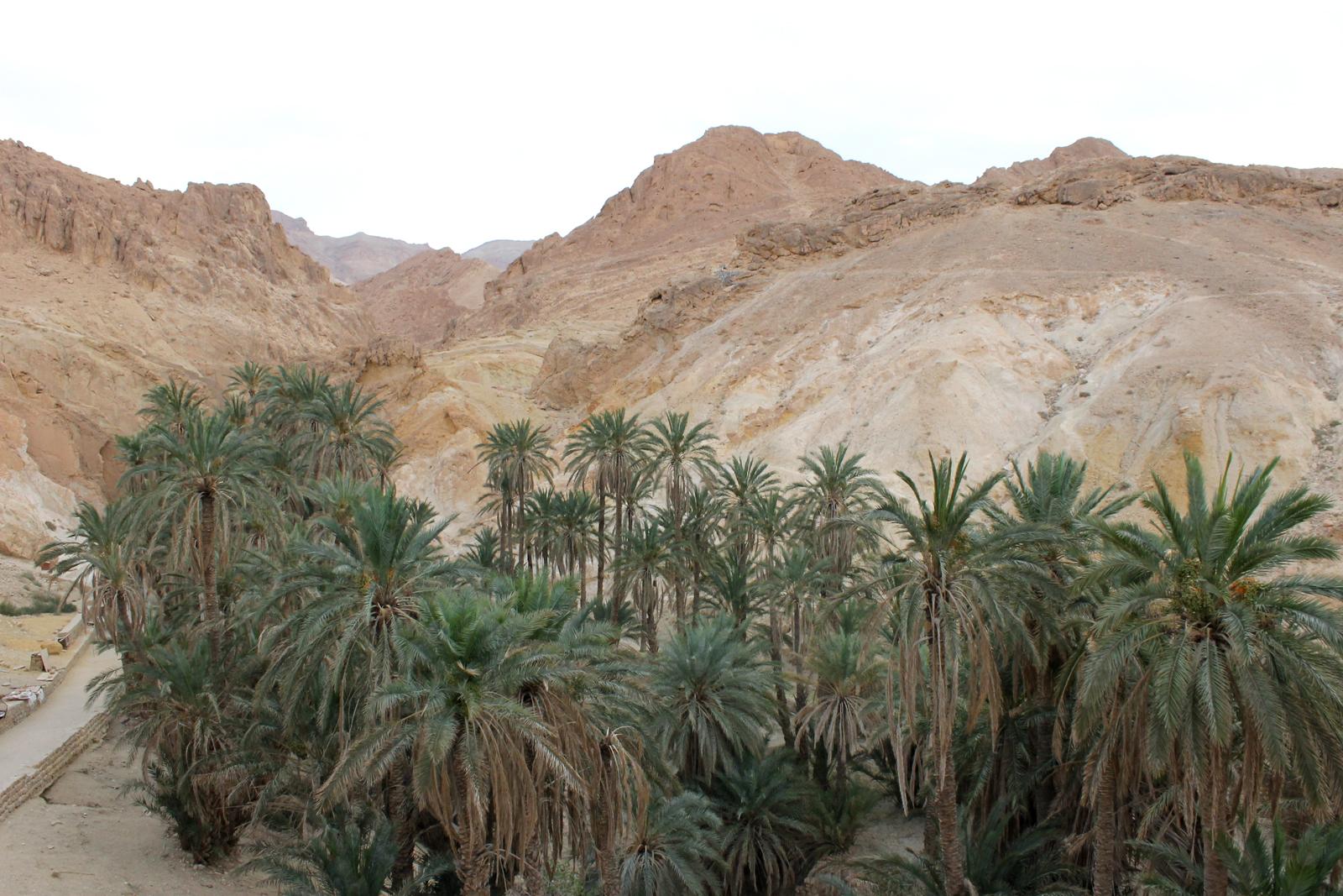 пальмы в оазисе