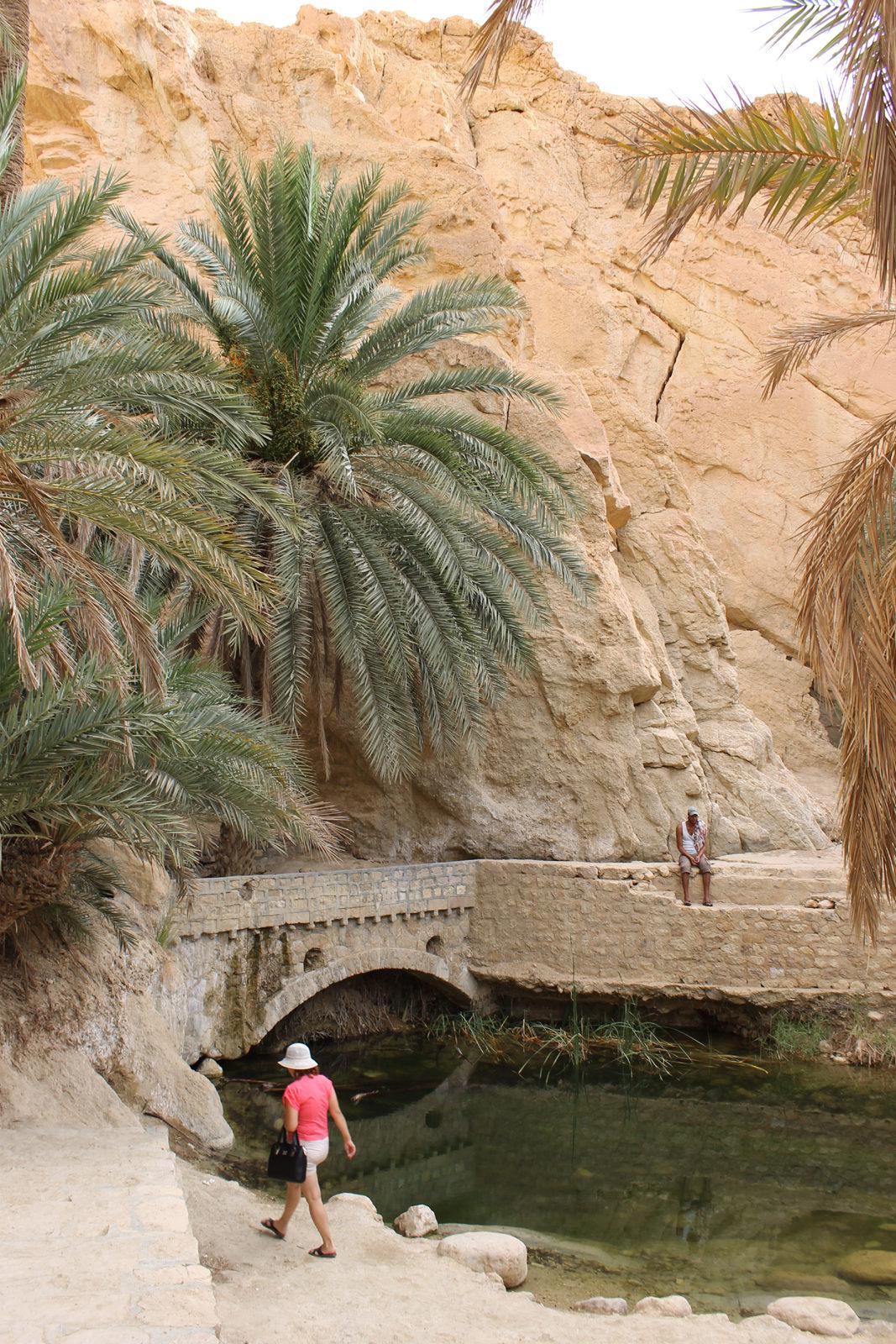 пальмы и мостик