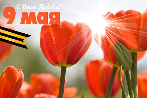тюльпаны 9 мая