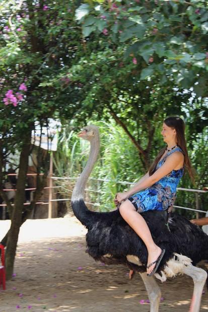 катание на страусах далат
