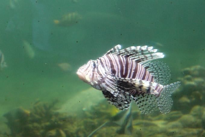 океанариум нячанга рыбы