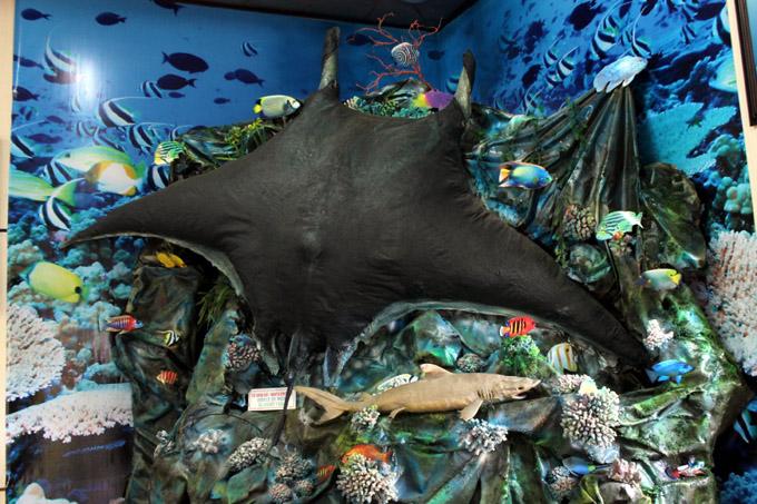 музей океанариум нячанга