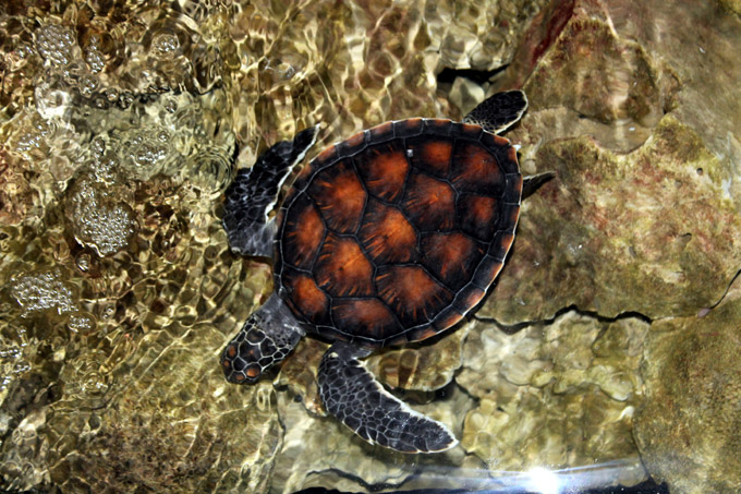 океанариум нячанг черепаха